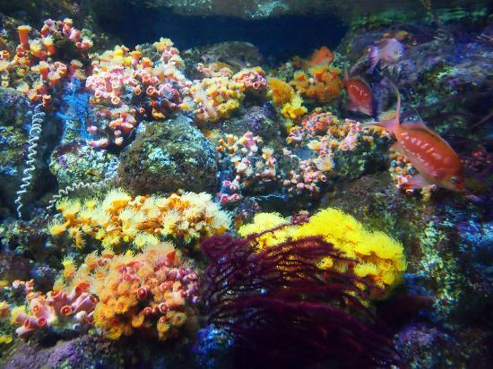Coral fish - Picture of Enoshima Aquarium, Fujisawa - TripAdvisor