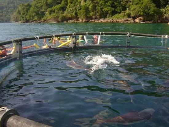 Pousada Nautilus: criação de bijupira