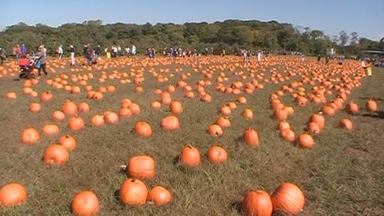 Colts Neck, Nueva Jersey: Pumpkin patch of Eastmont Orchards