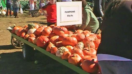 Colts Neck, Nueva Jersey: Wagon of pumpkins by exit of Eastmont Orchards