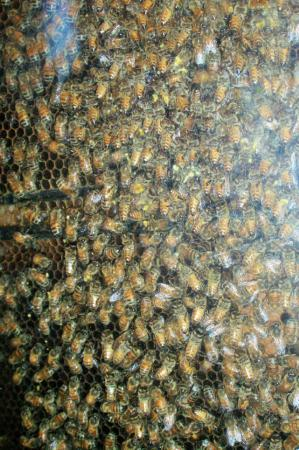 Colts Neck, Nueva Jersey: Bee have near exit of Delicious Orchards