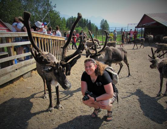 Reindeer Farm: What a wonderful experience!