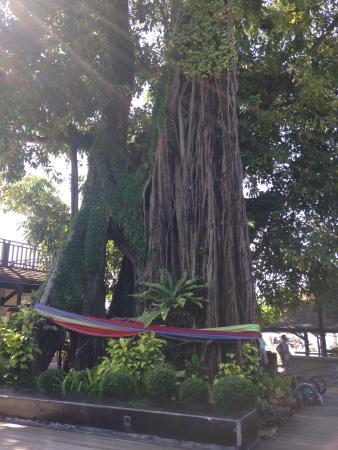 Phi Phi Banyan Villa: photo1.jpg