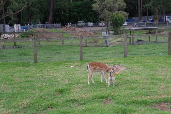 Golden Ridge Animal Farm