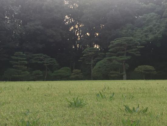 花が咲き誇る園内 - Picture of Yoyogi Park, Shibuya - TripAdvisor