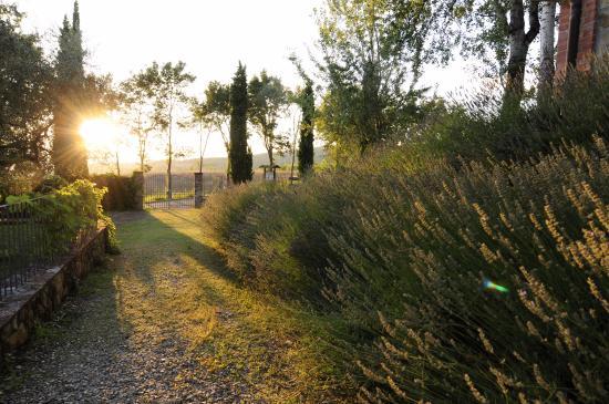 Fattoria di Belvedere: Unsere Abendaussicht