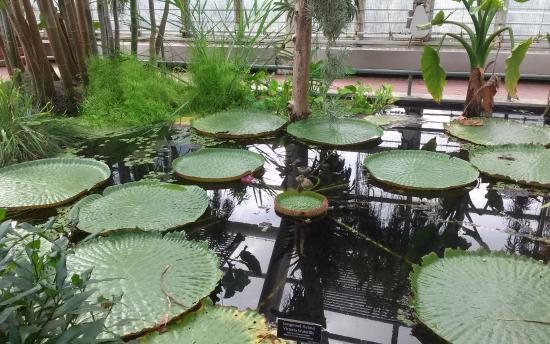 Indoor water gardens picture of brooklyn botanic garden for Indoor botanical gardens