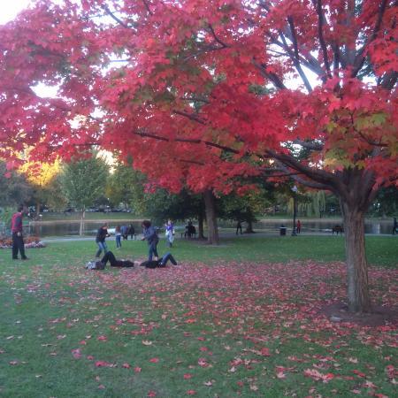 Walk In The Park Picture Of Boston Public Garden Boston Tripadvisor