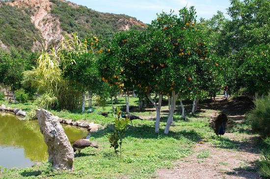 Hedelmäpuita lammen rannalla - Picture of Botanical Park ...
