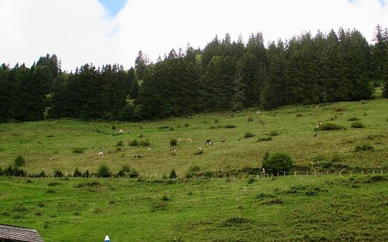 Moleson, Ελβετία: cows in a distant field - the cheese producers?