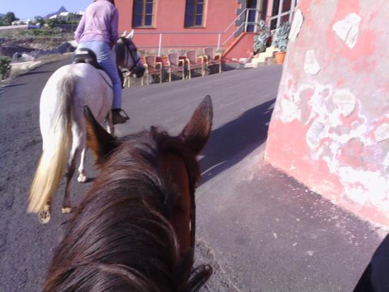 Tenerife Horse Riding