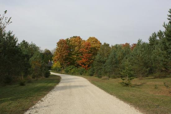 Durham, Kanada: Forest Edge peaking out through the trees in the Fall