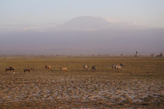 Bruno Safaris - Day Tours: Amboseli National Park