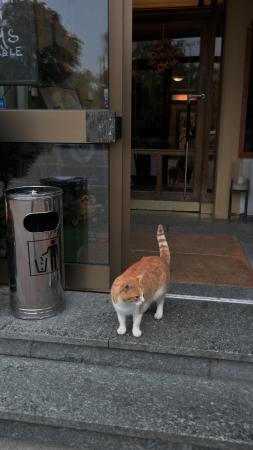 Gasthof Post: Hotel Cat?