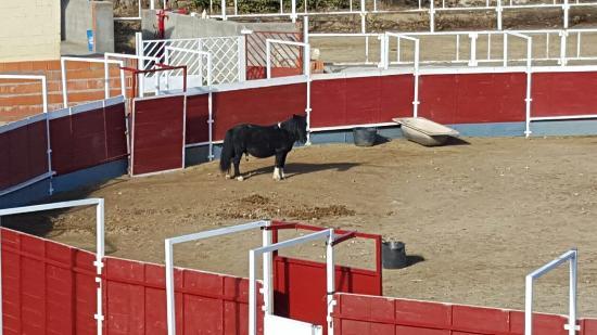 Navaluenga, Espanha: photo1.jpg