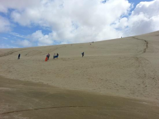 Cape Tours Petricevich: boogie boarding on sand dunes