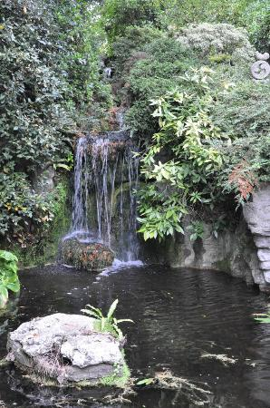 Poole, UK: Garden