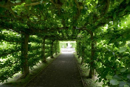 Κένταλ, UK: Топиарный  сад