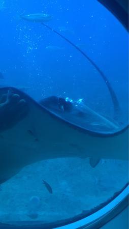 Submarine Safaris : photo2.jpg