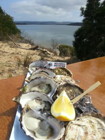 Swansea, Австралия: Melshell Shell Oysters