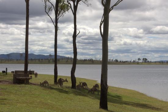 Camping spot - Picture of Wivenhoe Dam, Brisbane - TripAdvisor