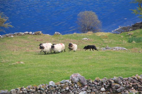 Killary Sheep Farm Leenane All You Need To Know Before You Go Updated 2021 Leenane Ireland Tripadvisor