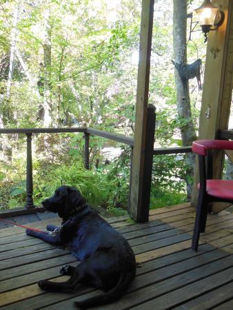 Kunseikobokoshiji: 森の中で気持のいいランチ