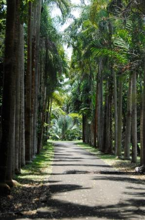 ssr botanic garden allee du jardin - Allee De Jardin