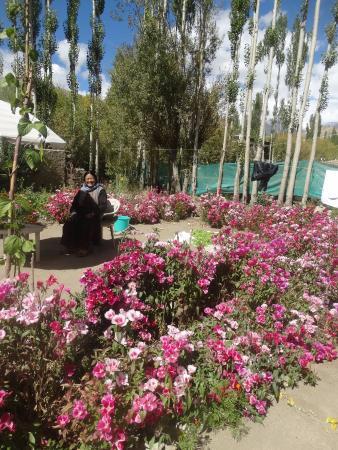 Hotel Shaolin Ladakh: Grandma In The Guest Houseu0027s Flower Garden