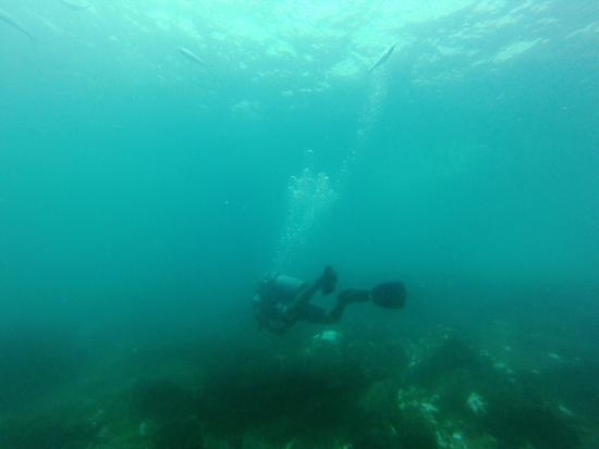 Goa Aquatics: photo3.jpg