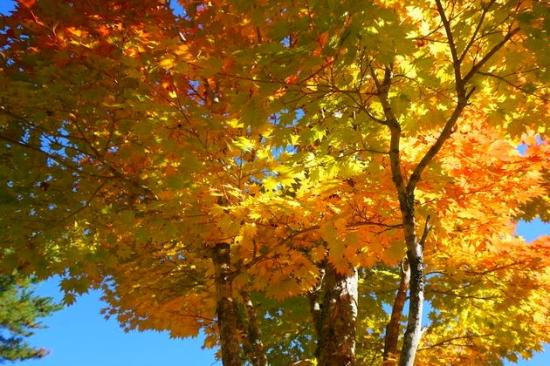 Michi-no-Eki - Pascal Kiyomi : 紅葉が綺麗
