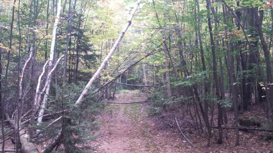 Savoy, MA: nearby hiking trail