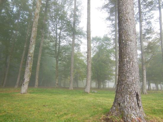 Minamitsuru-gun, Japón: 朝靄の「林ラン」