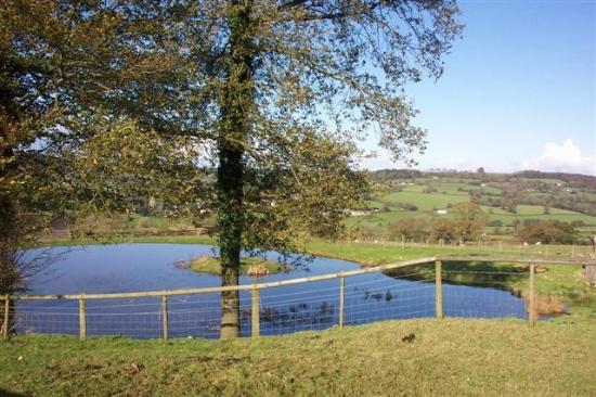 Courtmoor Farm Cottages: Courtmoor pond