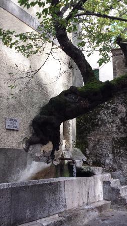 Bagnoli Irpino, Italy: Il carpine che fuoriesce dal muro.