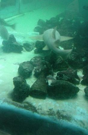 Shark Picture Of Clearwater Marine Aquarium Clearwater