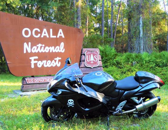 Ocala National Forest Bed And Breakfast