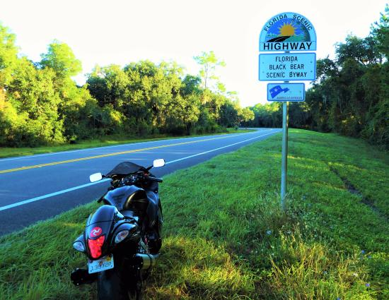 Umatilla, Φλόριντα: Florida Black Bear Scenic Byway