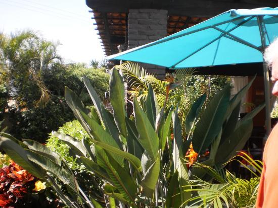 Roberto's Restaurant: tropical garden