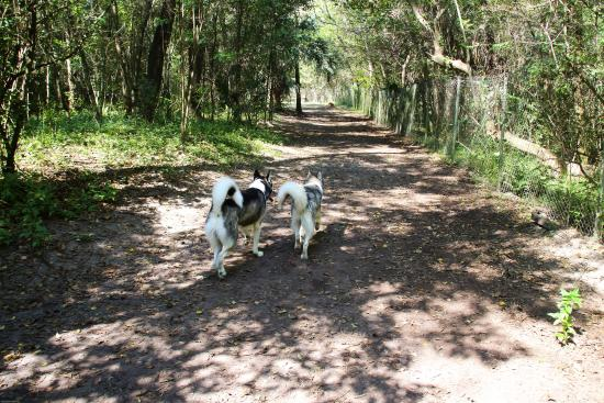 Dog Wood Park: Two of my dogs blazing the trails together through the woods!