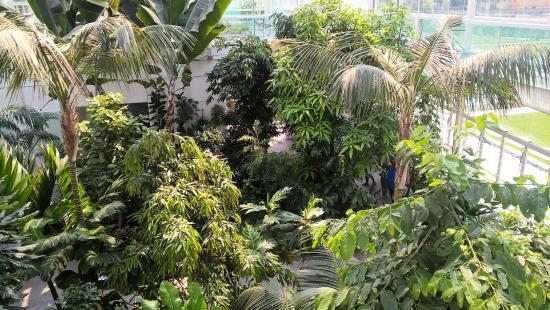 In visita all orto botanico di padova abanoritz