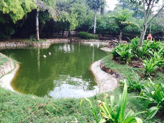 Peepal Kothi