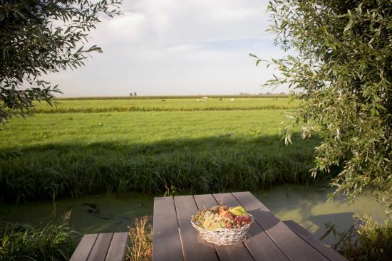 B&B Gastenverblijf Hoogenboom: View looking east
