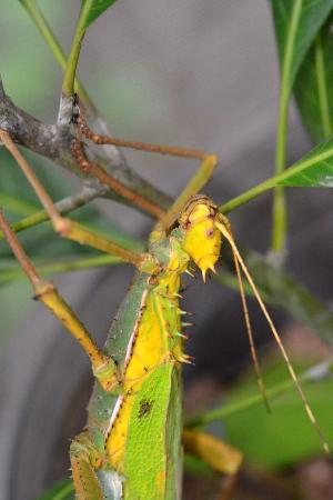 insect spider lizard - Picture of Siam Insect Zoo, Mae Rim - TripAdvisor
