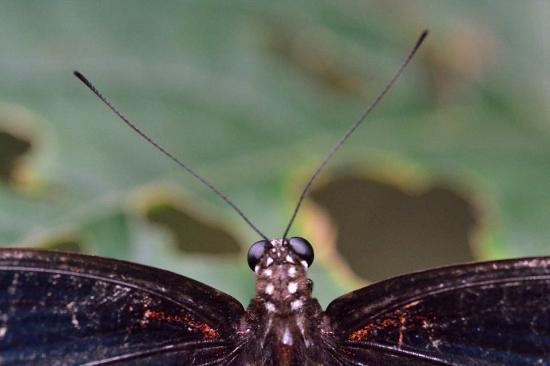 insect spider lizard - Foto de Siam Insect Zoo, Mae Rim - TripAdvisor