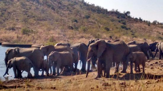 Game Safari - Picture of Pilanesberg National Park, Sun City ...
