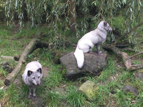 Bospark 't Wolfsven