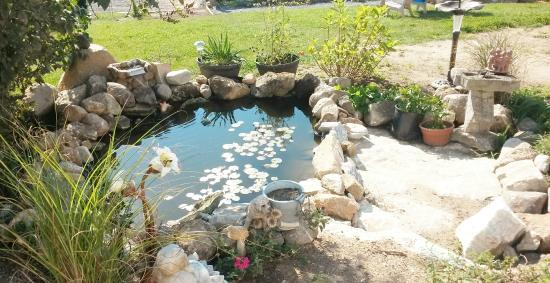 Lanark, Kanada: Sitting by the goldfish ponds allows time to ponder and reflect.