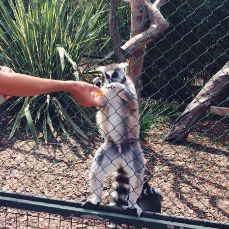 Parc foto di jardin zoologique tropical la londe les for Jardin zoologique tropical