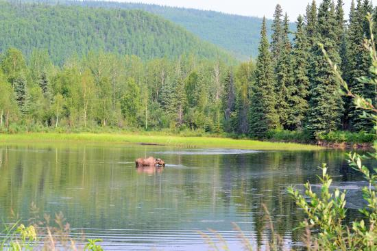 Chena lake picture of chena river state recreation area for Fishing in fairbanks alaska